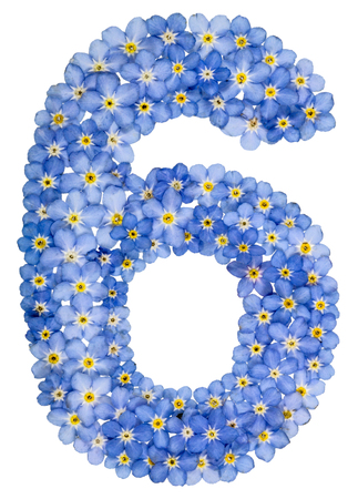 computation: Arabic numeral 6, six, , from blue forget-me-not flowers, isolated on white background