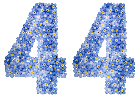 computation: Arabic numeral 44, forty four, from blue forget-me-not flowers, isolated on white background