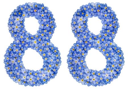 computation: Arabic numeral 88, eighty eight, from blue forget-me-not flowers, isolated on white background