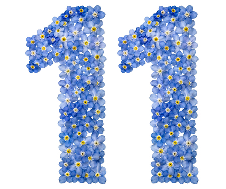 Arabic numeral 11, eleven, from blue forget-me-not flowers, isolated on white background Фото со стока