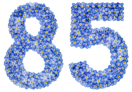 Arabic numeral 85, eighty five, from blue forget-me-not flowers, isolated on white background