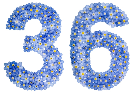 Arabic numeral 36, thirty six, from blue forget-me-not flowers, isolated on white background