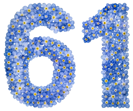Arabic numeral 61, sixty one, from blue forget-me-not flowers, isolated on white background Stock Photo