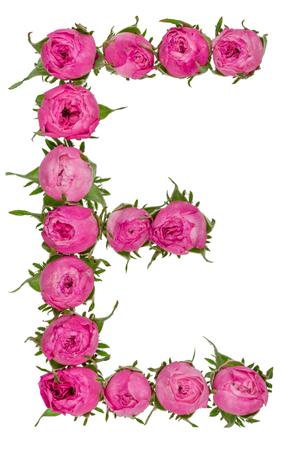 Letter E alphabet from flowers of roses, isolated on white background