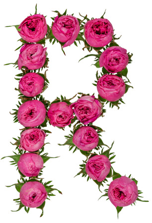 R: Letter R alphabet from flowers of roses, isolated on white background