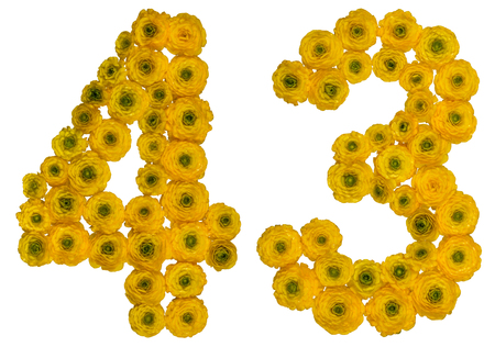 Arabic numeral 43, forty three, from yellow flowers of buttercup, isolated on white background