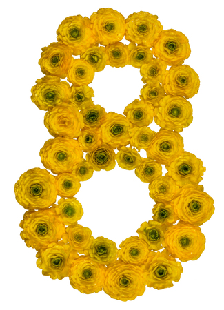 ordinal: Arabic numeral 8, eight, from yellow flowers of buttercup, isolated on white background