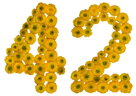 computation: Arabic numeral 42, forty two, from yellow flowers of buttercup, isolated on white background