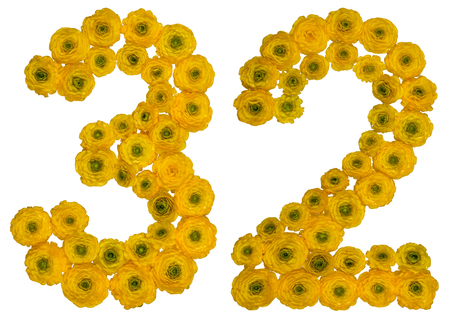ordinal: Arabic numeral 32, thirty two, from yellow flowers of buttercup, isolated on white background