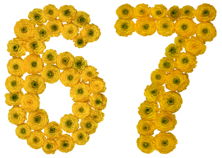 Arabic numeral 67, sixty seven, from yellow flowers of buttercup, isolated on white background