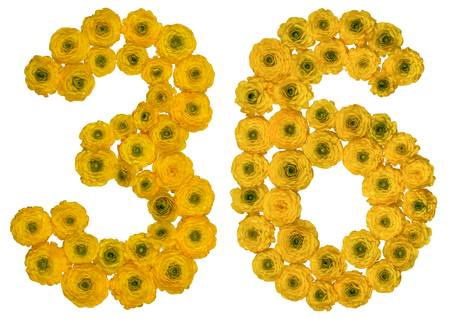 ordinal: Arabic numeral 36, thirty six, from yellow flowers of buttercup, isolated on white background Stock Photo