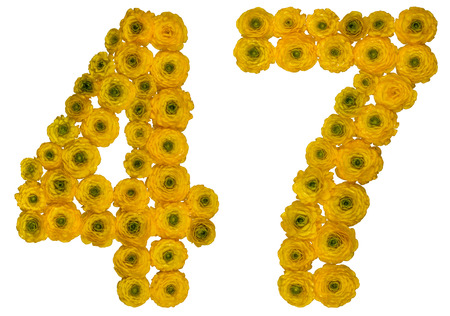 computation: Arabic numeral 47, forty seven, from yellow flowers of buttercup, isolated on white background Stock Photo