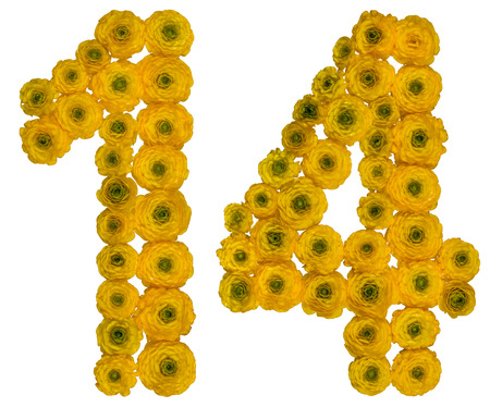 ordinal: Arabic numeral 14, fourteen,  from yellow flowers of buttercup, isolated on white background