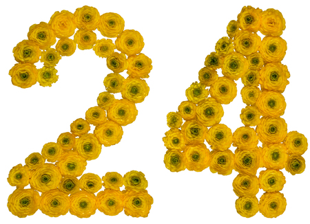 computation: Arabic numeral 24, twenty four, from yellow flowers of buttercup, isolated on white background