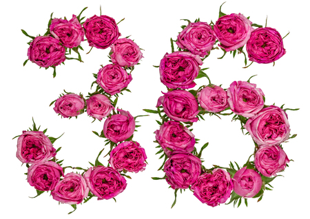 number 36: Arabic numeral 36, thirty six, from red flowers of rose, isolated on white background