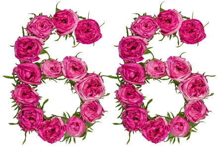 Arabic numeral 66, sixty six, from red flowers of rose, isolated on white background