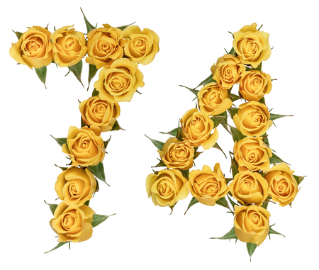 computation: Arabic numeral 74, seventy four, from yellow flowers of rose, isolated on white background