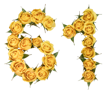 Arabic numeral 61, sixty one, from yellow flowers of rose, isolated on white background
