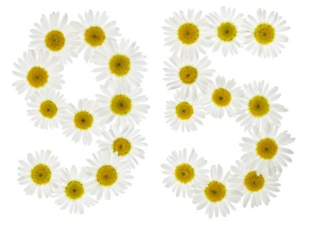 ninety: Arabic numeral 95, ninety five, from white flowers of chamomile, isolated on white background