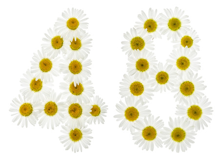 computation: Arabic numeral 48, forty eight, from white flowers of chamomile, isolated on white background
