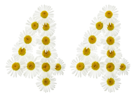 computation: Arabic numeral 44, forty four, from white flowers of chamomile, isolated on white background