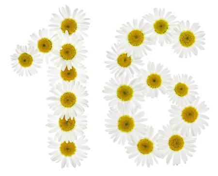 arabic number: Arabic numeral 16, sixteen, from white flowers of chamomile, isolated on white background Stock Photo
