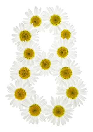 computation: Arabic numeral 8, eight, from white flowers of chamomile, isolated on white background
