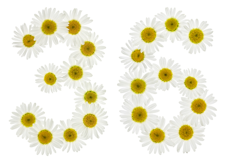matricaria: Arabic numeral 36, thirty six, from white flowers of chamomile, isolated on white background
