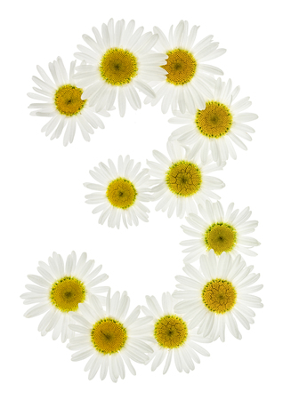 matricaria: Arabic numeral 3, three, from white flowers of chamomile, isolated on white background Stock Photo