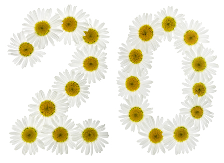 matricaria: Arabic numeral 20, twenty, two, from white flowers of chamomile, isolated on white background