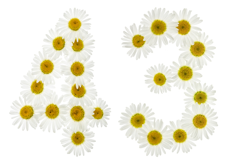 Arabic numeral 43, forty three, from white flowers of chamomile, isolated on white background Stock Photo