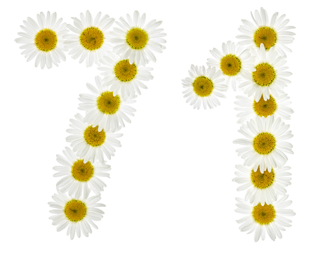 computation: Arabic numeral 71, seventy one, from white flowers of chamomile, isolated on white background Stock Photo