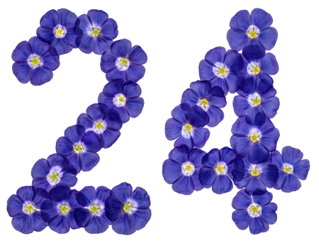 computation: Arabic numeral 24, twenty four, from blue flowers of flax, isolated on white background
