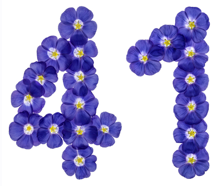 computation: Arabic numeral 41, forty one, from blue flowers of flax, isolated on white background