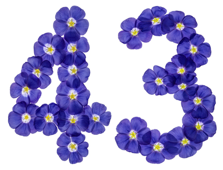Arabic numeral 43, forty three, from blue flowers of flax, isolated on white background