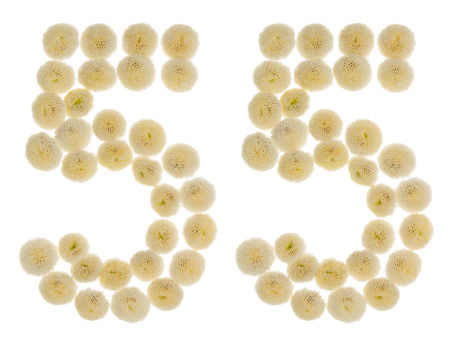Arabic numeral 55, fifty five, from cream flowers of chrysanthemum, isolated on white background Stock Photo