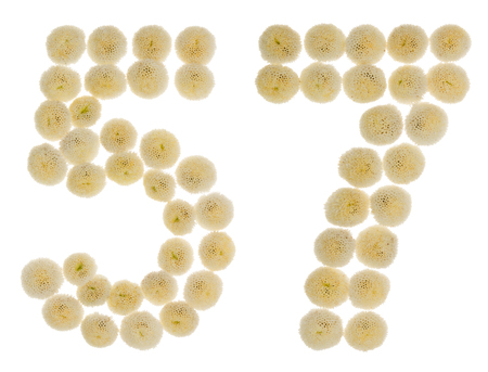 ordinal: Arabic numeral 57, fifty seven, from cream flowers of chrysanthemum, isolated on white background
