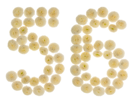 computation: Arabic numeral 56, fifty six, from cream flowers of chrysanthemum, isolated on white background