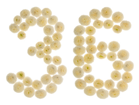 Arabic numeral 36, thirty six, from cream flowers of chrysanthemum, isolated on white background Stock Photo