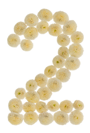 Arabic numeral 2, two, from cream flowers of chrysanthemum, isolated on white background