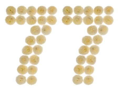 Arabic numeral 77, seventy seven, from cream flowers of chrysanthemum, isolated on white background