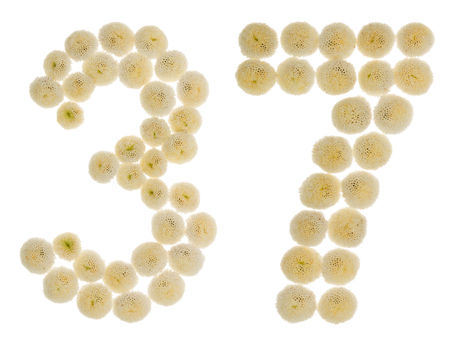 ordinal: Arabic numeral 37, thirty seven, from cream flowers of chrysanthemum, isolated on white background