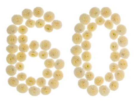 computation: Arabic numeral 60, sixty, from cream flowers of chrysanthemum, isolated on white background Stock Photo