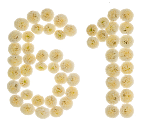 Arabic numeral 61, sixty one, from cream flowers of chrysanthemum, isolated on white background