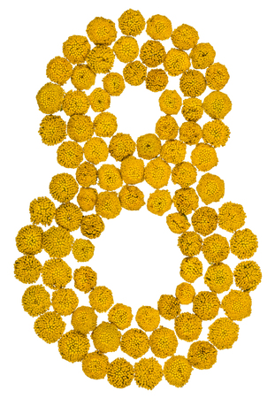 ordinal: Arabic numeral 8, eight, from yellow flowers of tansy, isolated on white background The tansy - a plant of the daisy family with yellow flat-topped buttonlike flower heads and aromatic leaves, formerly used in cooking and medicine.