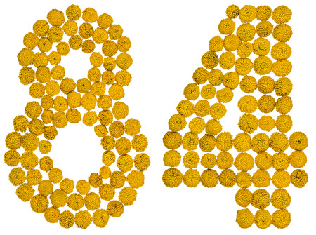 Arabic numeral 84, eighty four, from yellow flowers of tansy, isolated on white background The tansy - a plant of the daisy family with yellow flat-topped buttonlike flower heads and aromatic leaves, formerly used in cooking and medicine.
