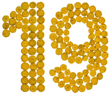 Arabic numeral 19, nineteen, from yellow flowers of tansy, isolated on white background The tansy - a plant of the daisy family with yellow flat-topped buttonlike flower heads and aromatic leaves, formerly used in cooking and medicine. Stock Photo