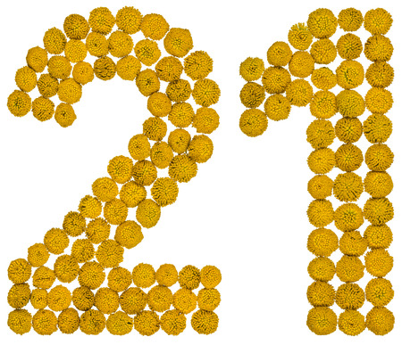 Arabic numeral 21, twenty one, from yellow flowers of tansy, isolated on white background The tansy - a plant of the daisy family with yellow flat-topped buttonlike flower heads and aromatic leaves, formerly used in cooking and medicine.