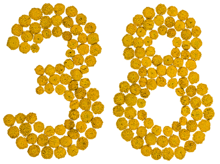 Arabic numeral 38, thirty eight, from yellow flowers of tansy, isolated on white background The tansy - a plant of the daisy family with yellow flat-topped buttonlike flower heads and aromatic leaves, formerly used in cooking and medicine.