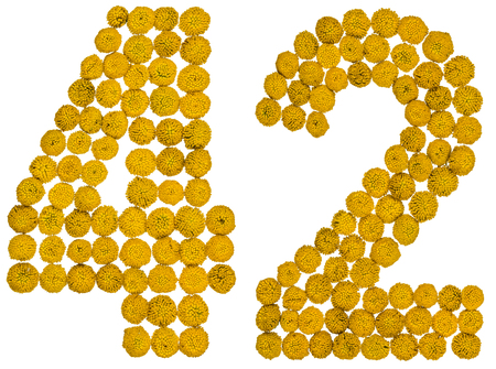 Arabic numeral 42, forty two, from yellow flowers of tansy, isolated on white background The tansy - a plant of the daisy family with yellow flat-topped buttonlike flower heads and aromatic leaves, formerly used in cooking and medicine.